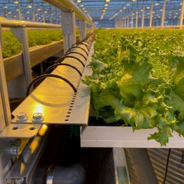 Green Automation -Fully Automated system Irrigation